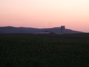 The view of the alfalfa fields at sunset.