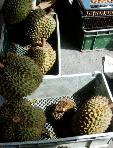 The durians have a pungent taste and smell.