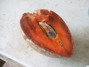 The mamey sapote is so sweet.