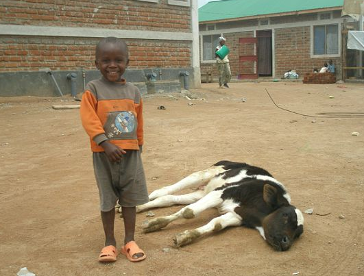 Nicko poses next to the cow (that often liked to lounge in the classroom as well).